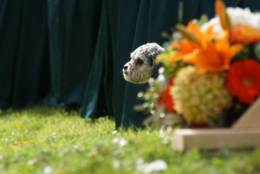5 Ways to Include Your Dog in Your Wedding Honorary Wedding Party Member
