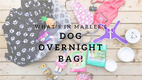 What's in Marlee's Dog Overnight Bag