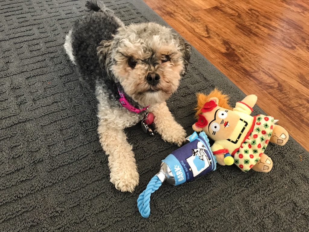 Barkbox Review - March BarkBox 2018 Marlee and her BarkBox Toys