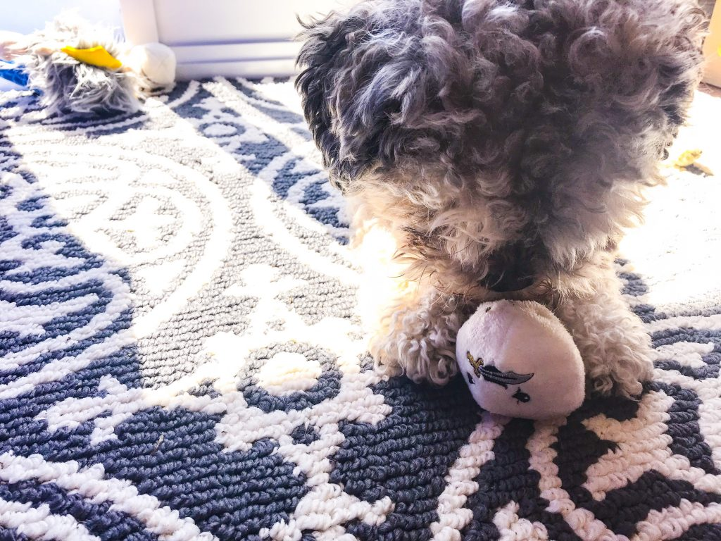 April BarkBox Review - Clam Overboard! Toy Pearl